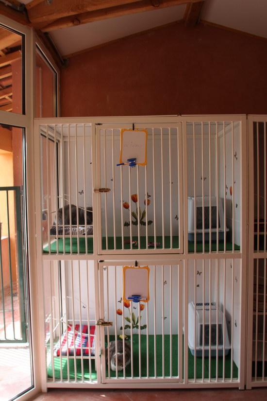 pension f line du ruisseau des blaqui res pension chats var 83 pension pour chats proche. Black Bedroom Furniture Sets. Home Design Ideas